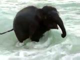 самый счастливый слон в мире